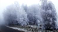 freezing fog frozen fog